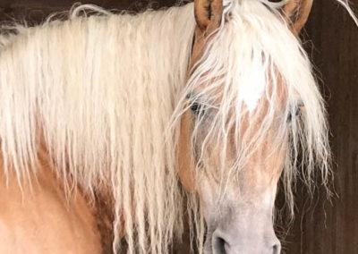 Coaching et Thérapie avec les chevaux