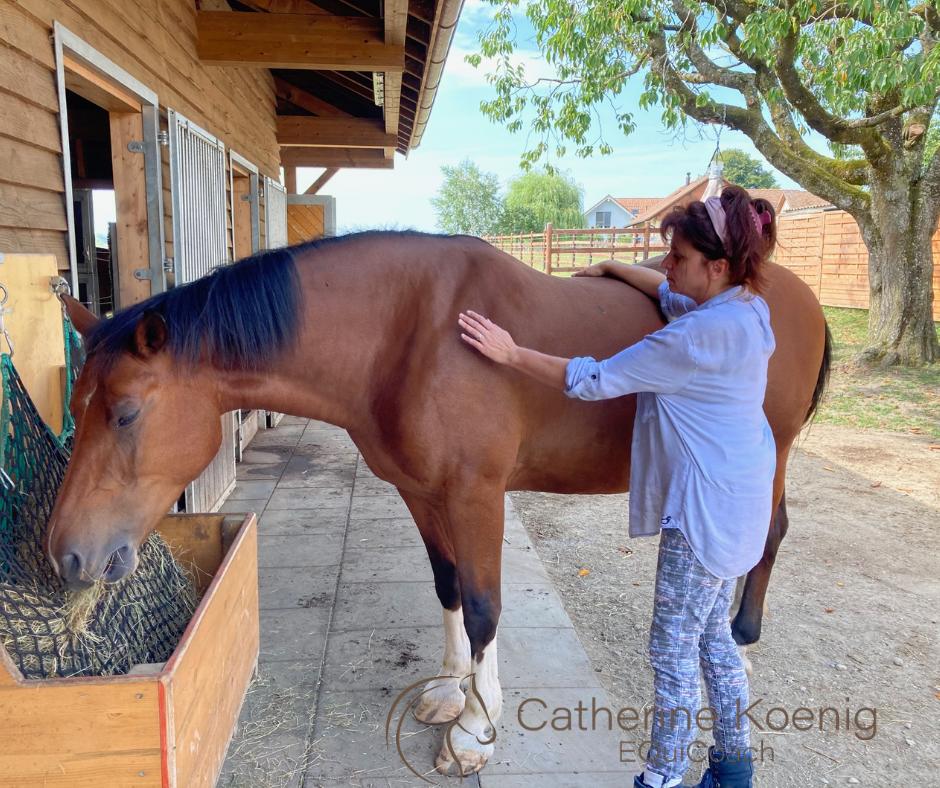 Transformation dans le coaching avec les chevaux