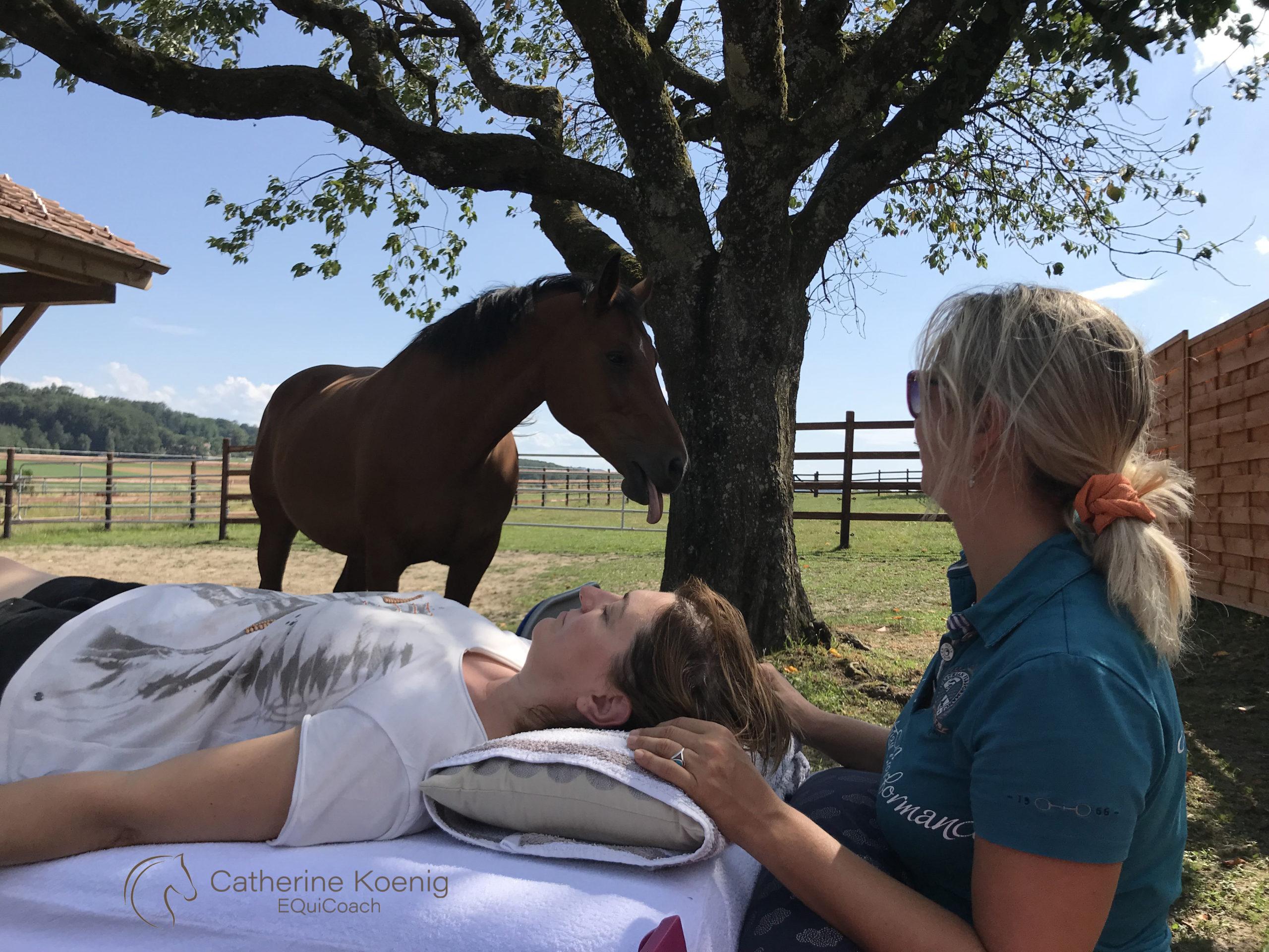 soin dans le jardin avec le cheval